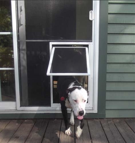 Extra large screen door with pet door